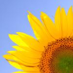 10 års barnløshed endte i en solstrålehistorie