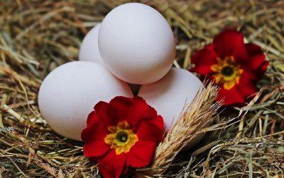 Dine æg har samme alder som dig