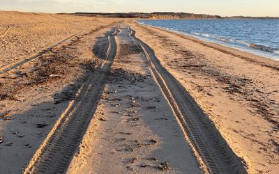 Solomor i kakkelovnen: Forløbet indtil nu